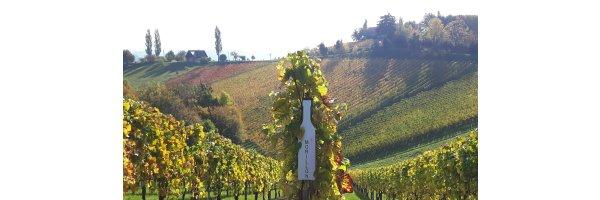 Chardonnay/Morillion