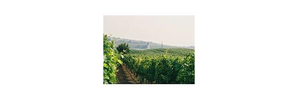 Pinot Noir (Blauburgunder AT,  Spätburgunder DE)